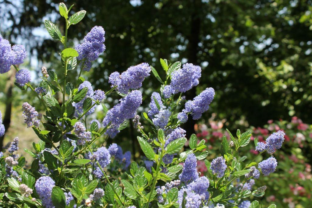 Flores do Jardim - Quinta da Regaleira - Sintra -Portugal