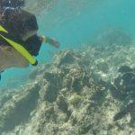 Snorkel na De Palm Island